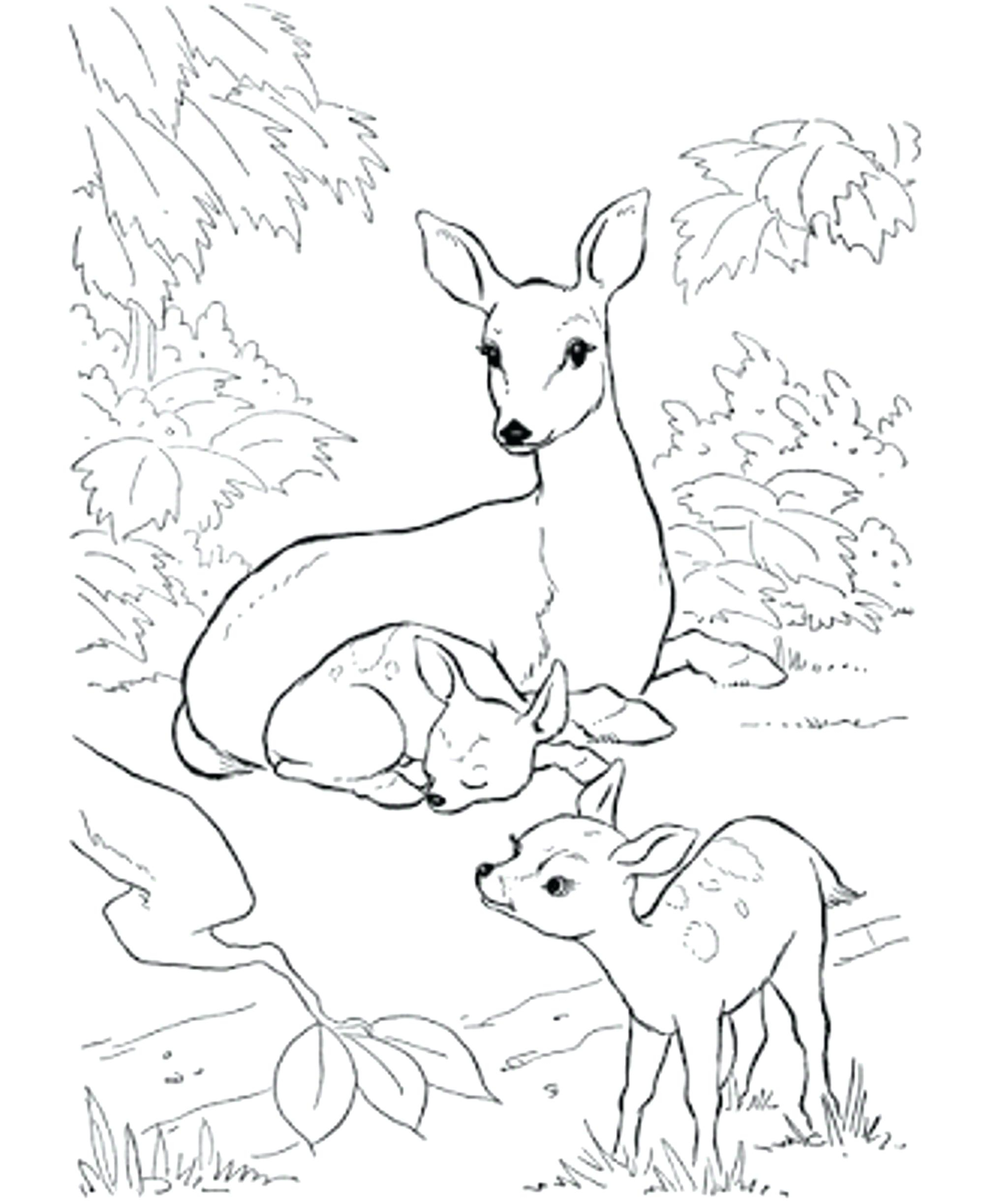 Deer Coloring Pages Coloring Pictures Of Deer Roamandfitco