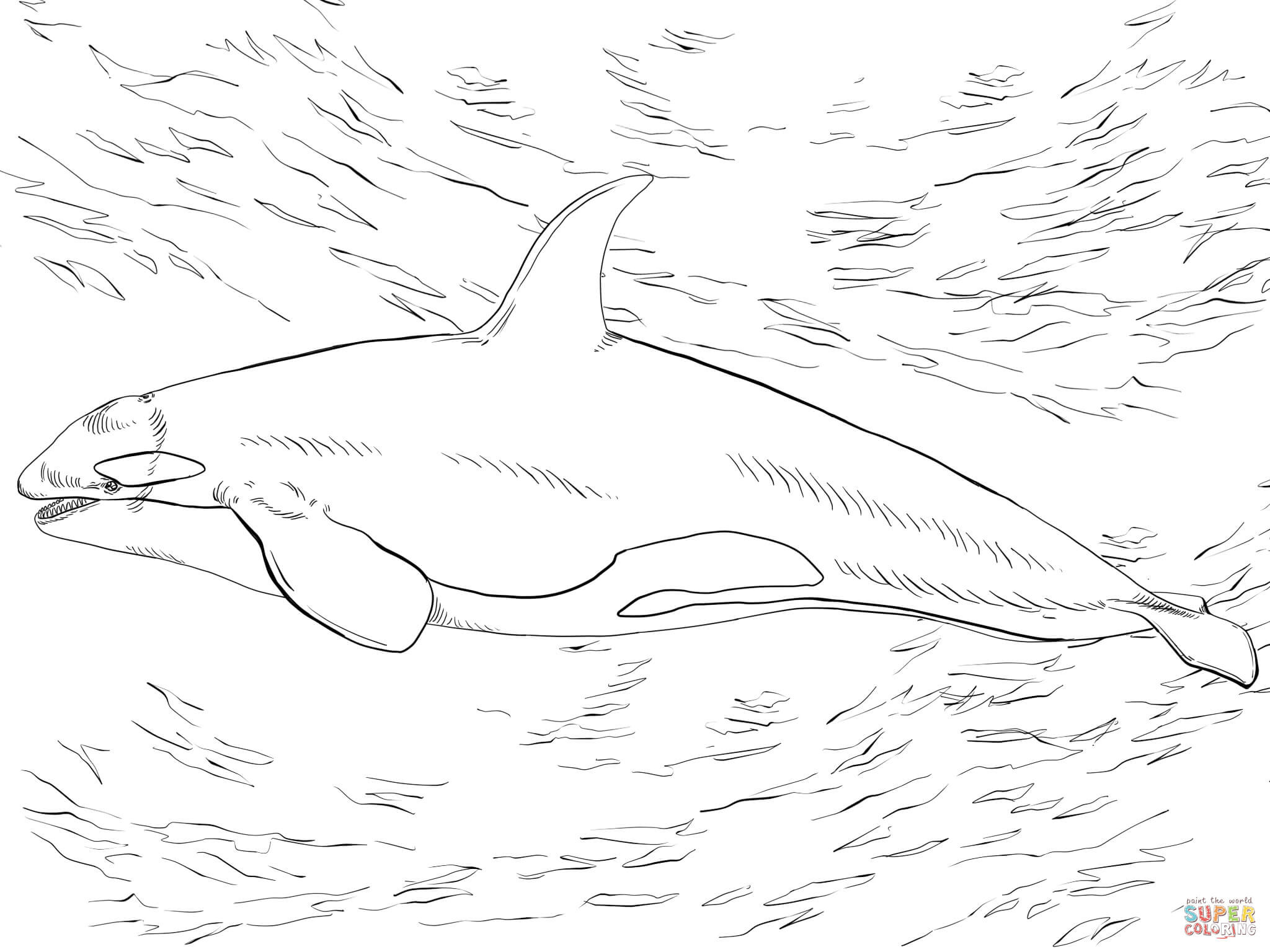Shamu Coloring Pages Killer Whale Orca Coloring Page With Orca Coloring Pages Coloring