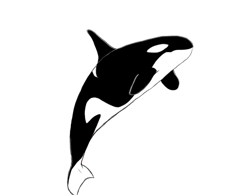 Shamu Coloring Pages Killer Whale Outline Drawing Free Download Best Killer Whale