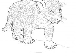 Baby Jaguar Coloring Pages Ba Jaguar Coloring Page Free Printable Coloring Pages