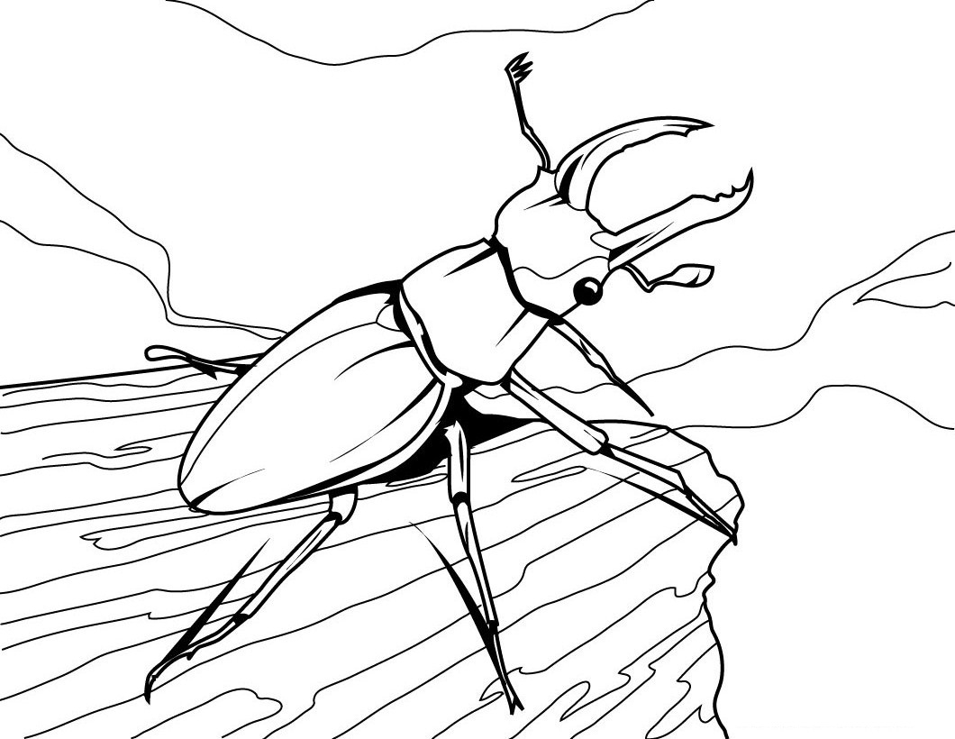 Bug Coloring Pages For Kids Coloring Free Insect Coloring Sheets Bug Pages For Kids Animals