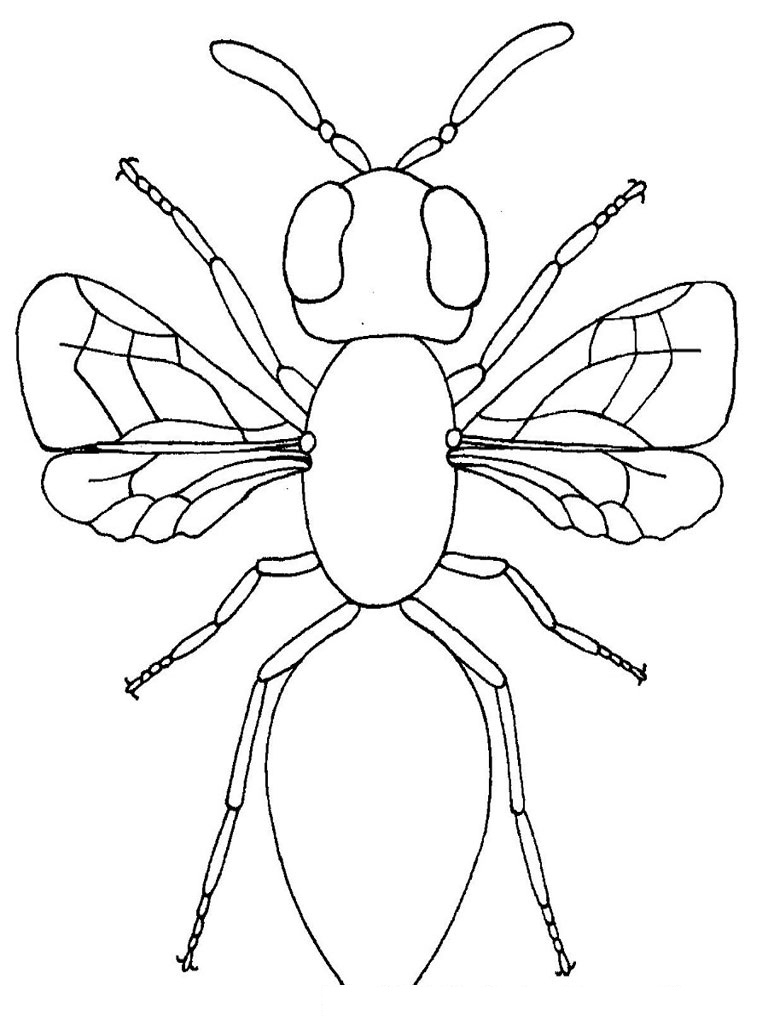 Bug Coloring Pages For Kids Coloring Ideas Printable Insect Coloring Pages At Getdrawings Com