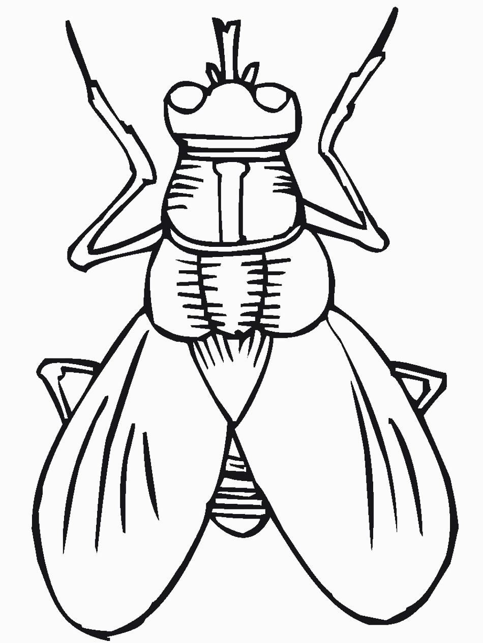 Bug Coloring Pages For Kids Free Printable Bug Coloring Pages For Kids For Bug Outline Get