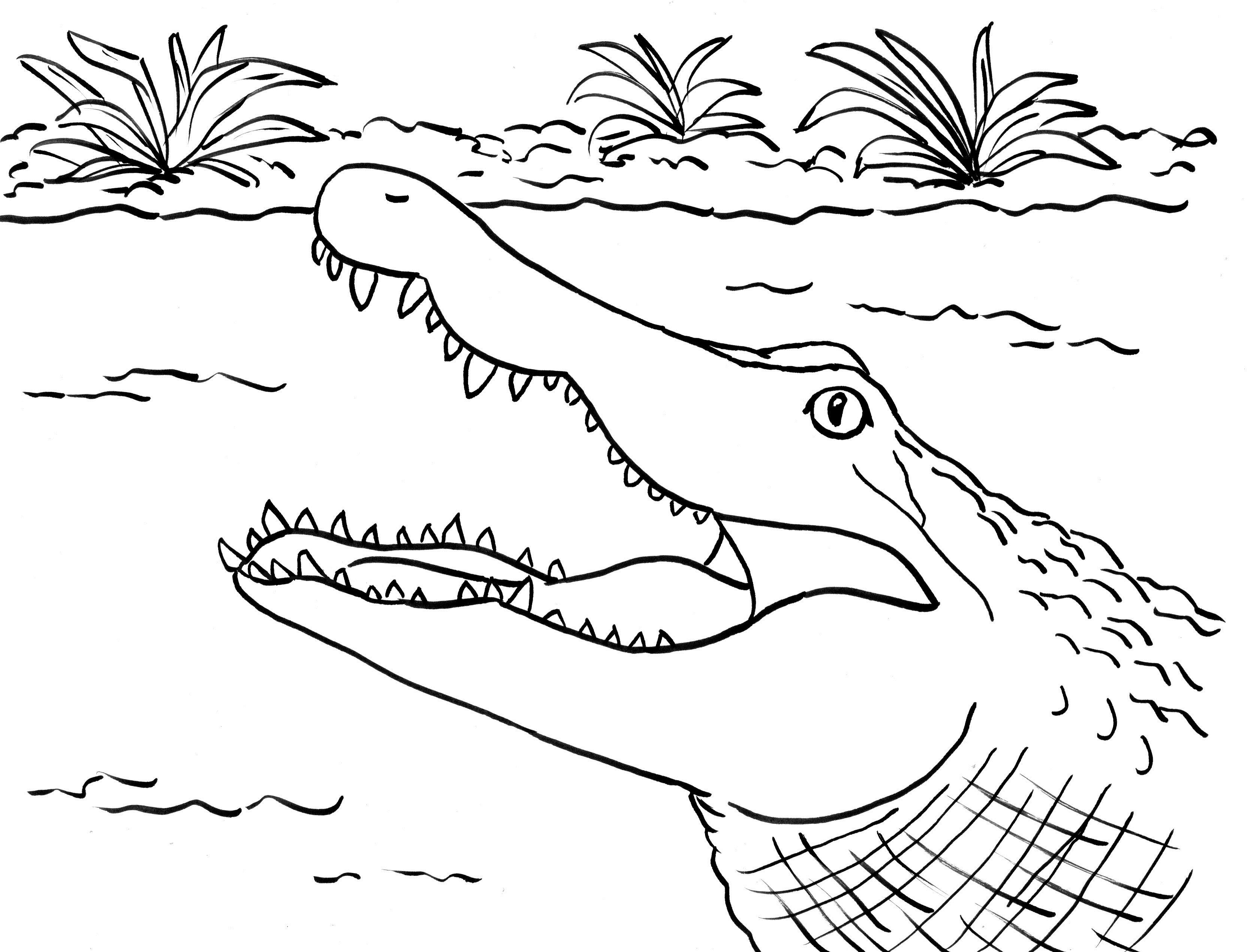 Coloring Page Alligator Alligator Coloring Page Art Starts For Kids