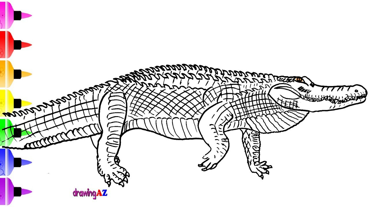 Coloring Page Alligator Alligator Coloring Page For Kid Learn To Draw And Titanoboa Coloring Page