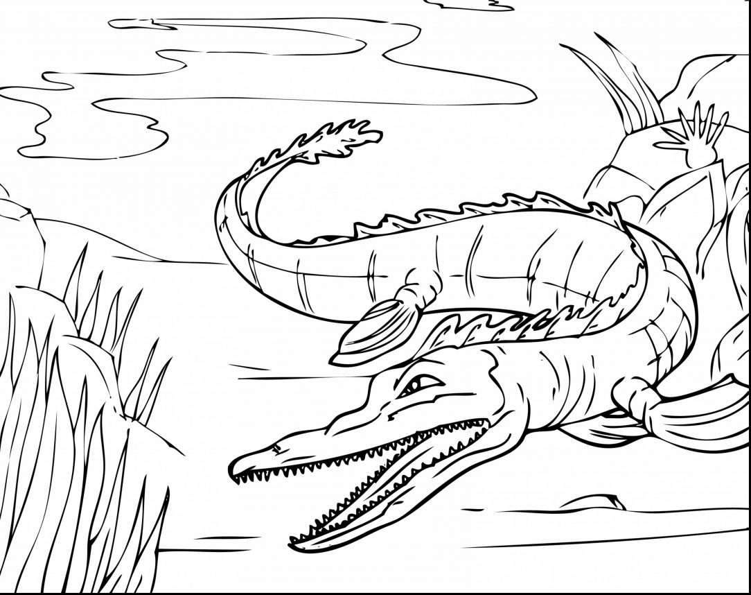 Coloring Page Alligator Alligator Coloring Page Gar American Cartoon Free Head Ba Letter A