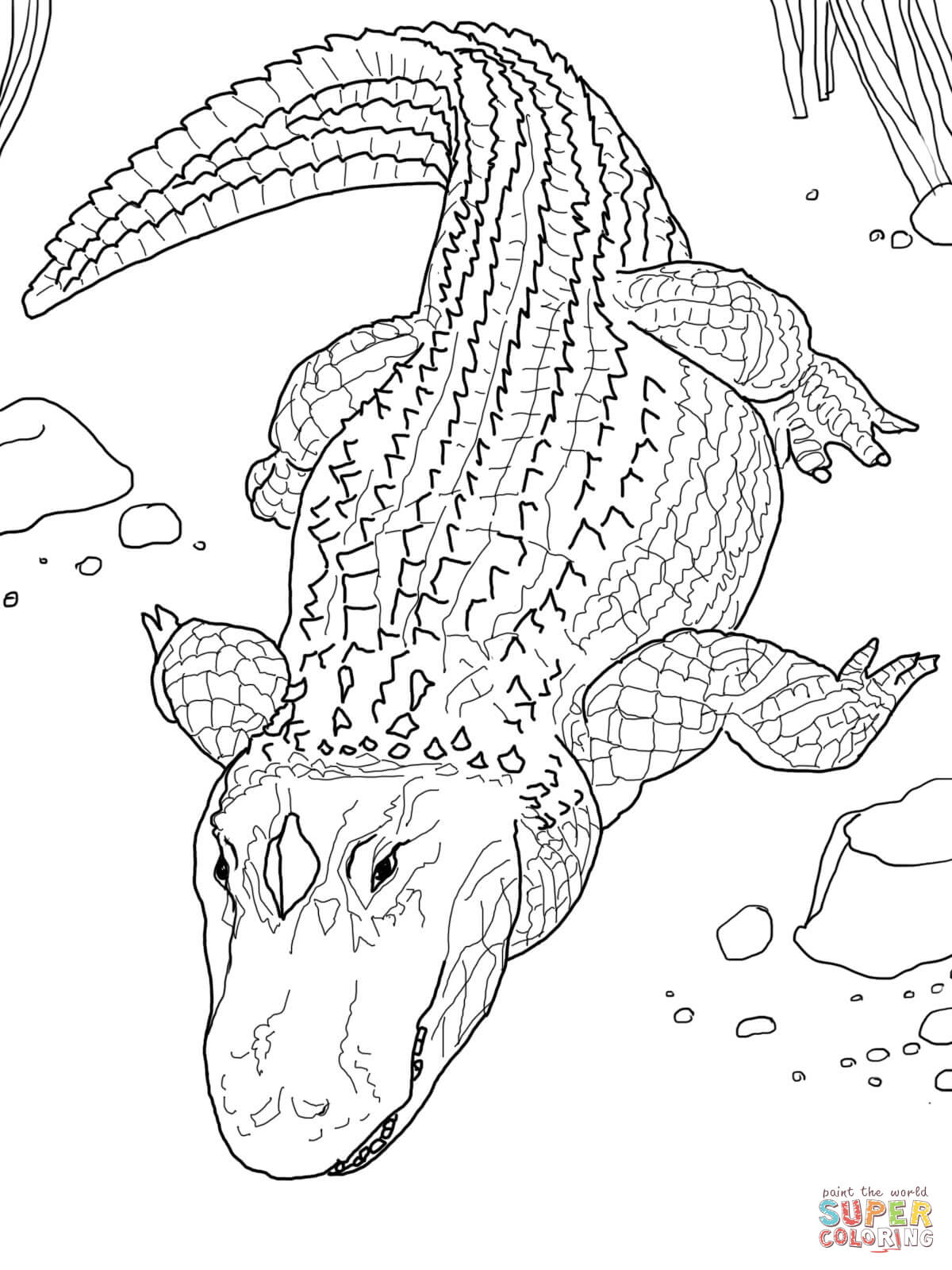 Coloring Page Alligator Alligators Coloring Pages Free Coloring Pages