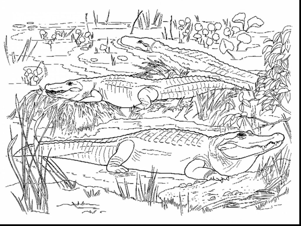 Coloring Page Alligator Coloring Book World Alligator Coloring Pages Sheets Volamtuoitho