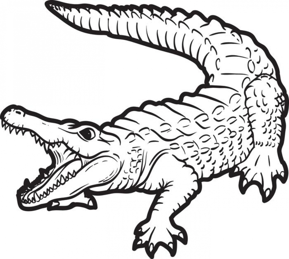 Coloring Page Alligator Get This Free Alligator Coloring Pages For Kids Yy6l0