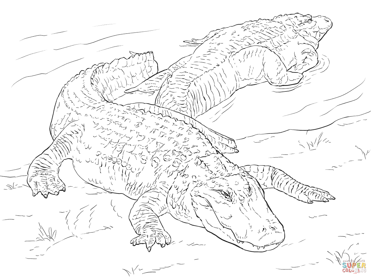 Coloring Page Alligator Two American Alligators Coloring Page Free Printable Coloring Pages