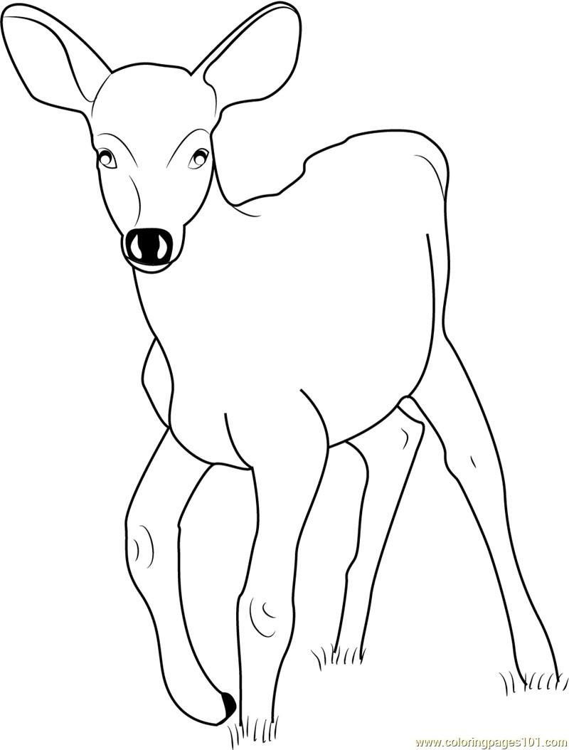 Deer Coloring Pages Ba Deer Coloring Page Free Deer Coloring Pages For Ba Deer