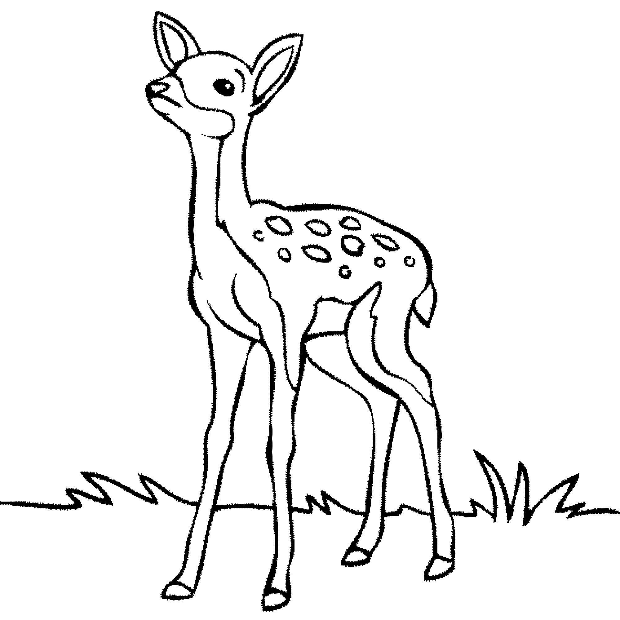 Deer Coloring Pages Cute Deer Coloring Pages