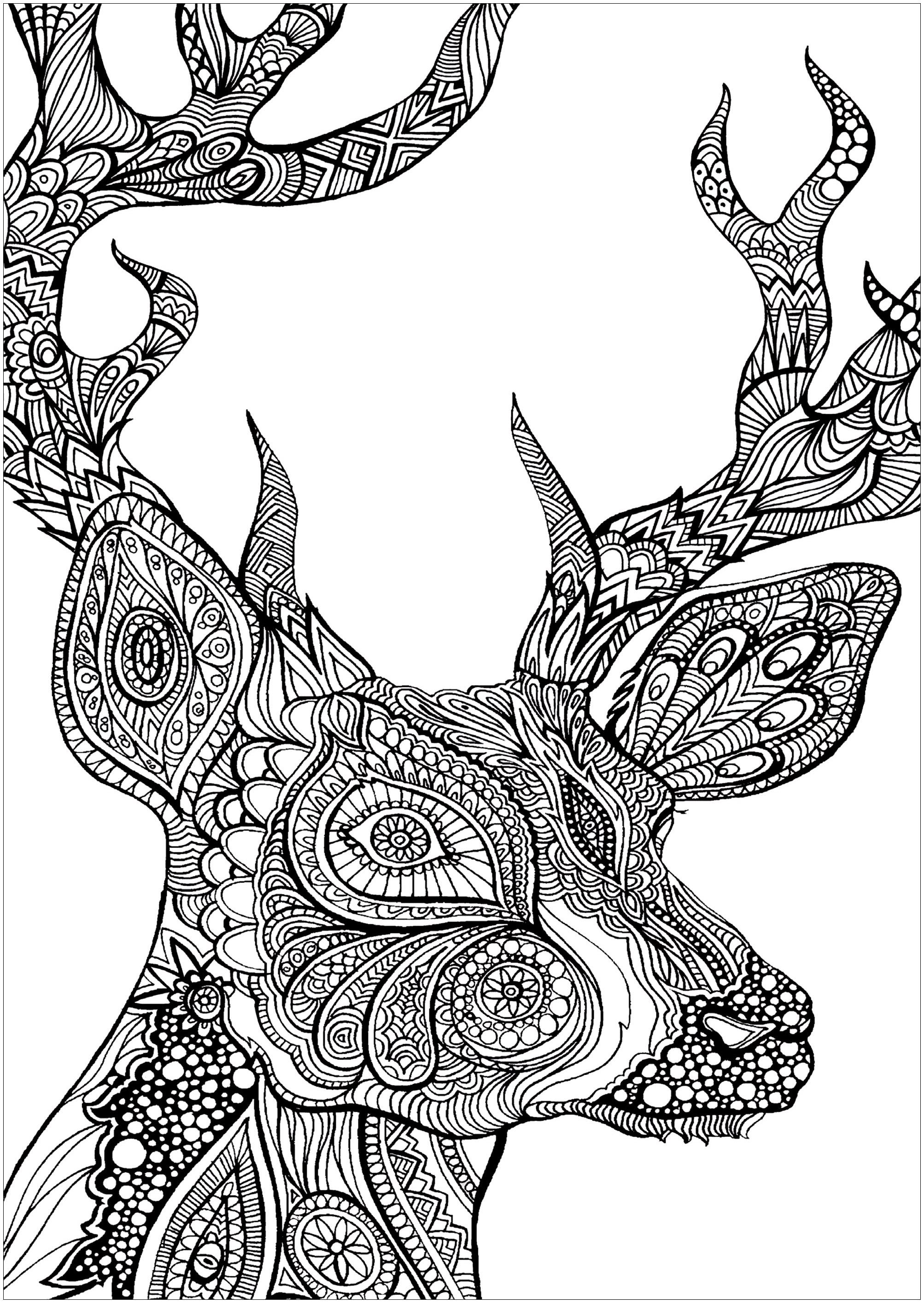 Deer Coloring Pages Deed Head Deers Adult Coloring Pages