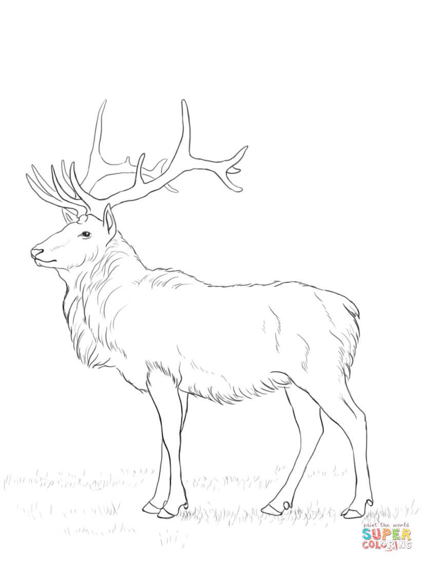 Deer Coloring Pages Deer Coloring Page Free Printable Coloring Pages