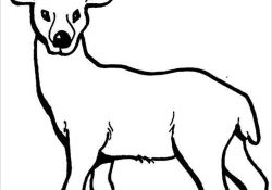 Deer Coloring Pages Deer Coloring Pages Coloringbay