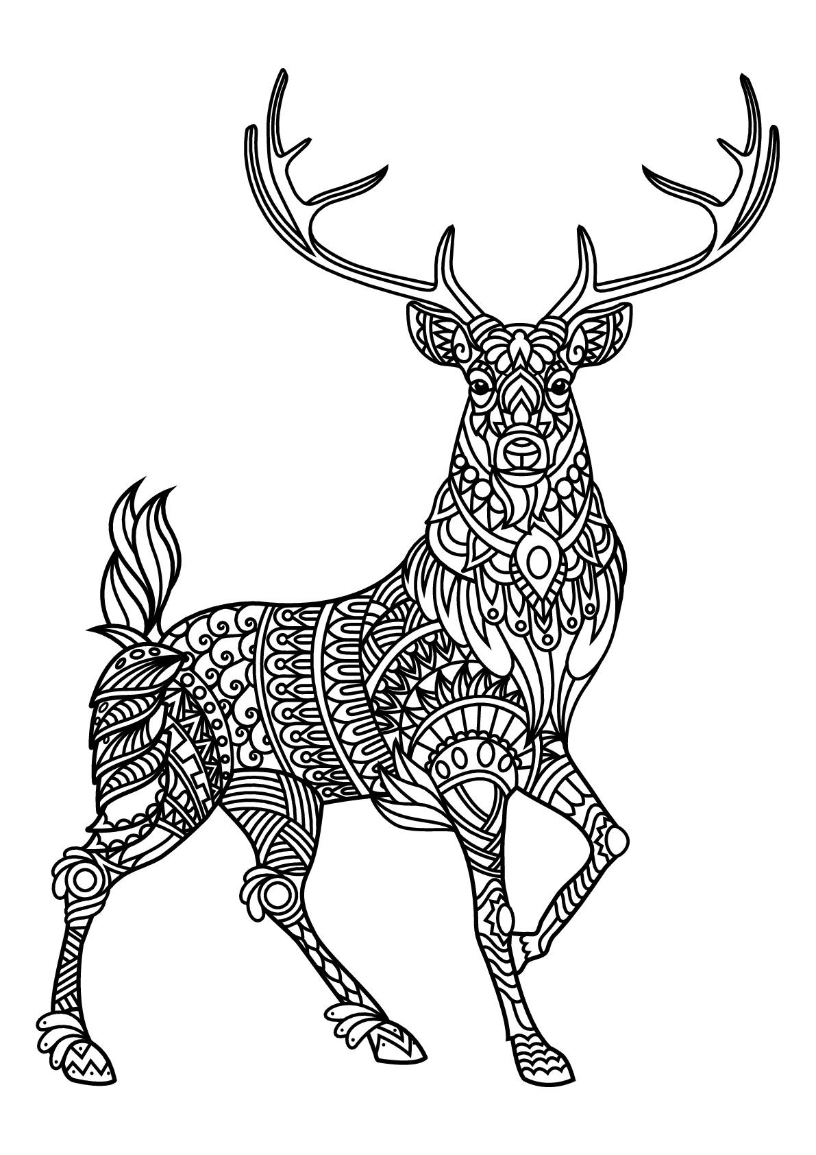 Deer Coloring Pages Free Book Deer Deers Adult Coloring Pages