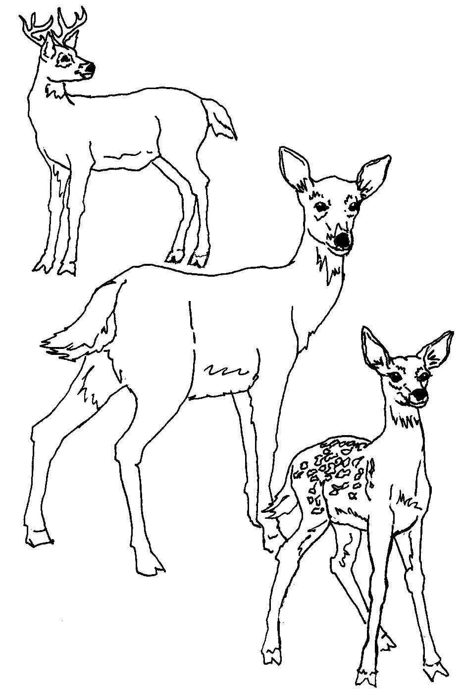 Deer Coloring Pages Free Printable Deer Coloring Pages For Kids