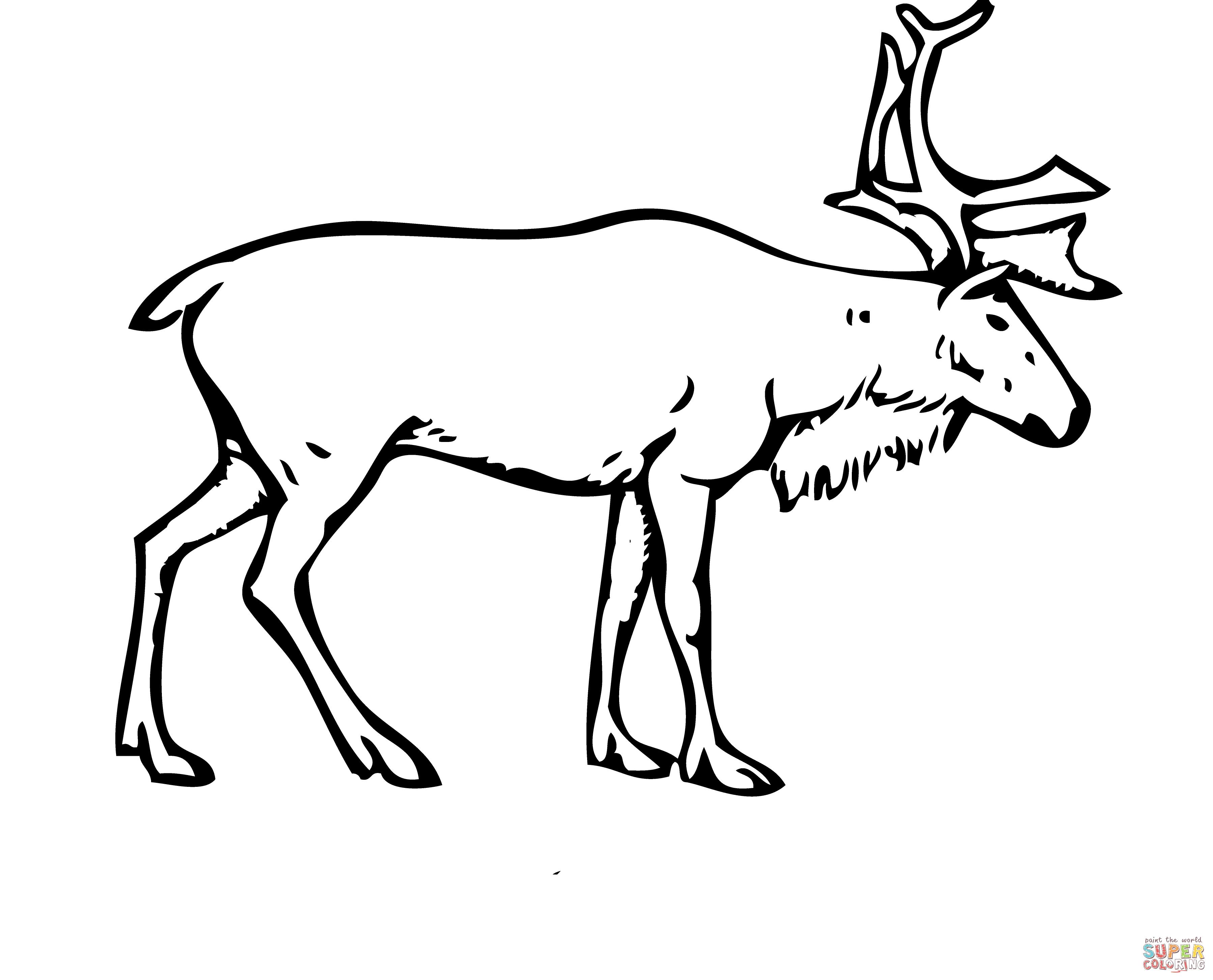 Deer Coloring Pages Reindeer Deer Coloring Page Free Printable Coloring Pages