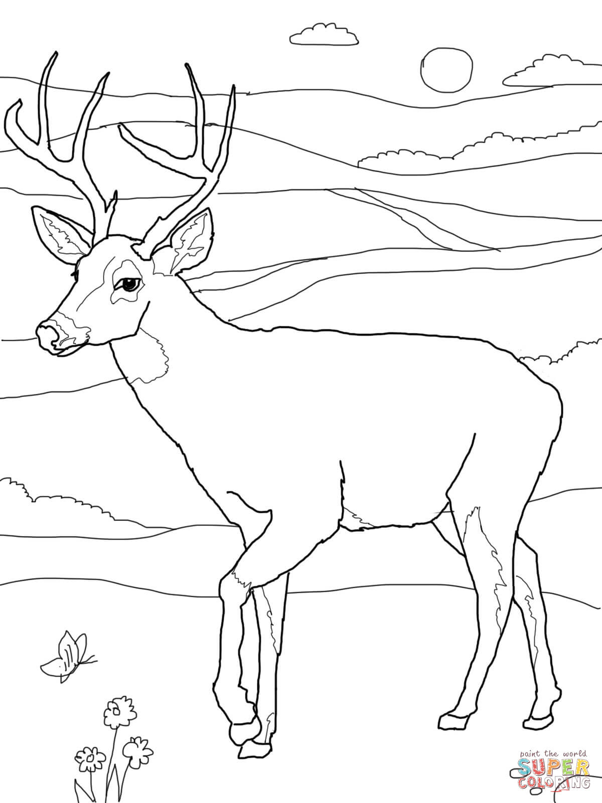 Deer Coloring Pages White Tailed Deers Coloring Pages Free Coloring Pages