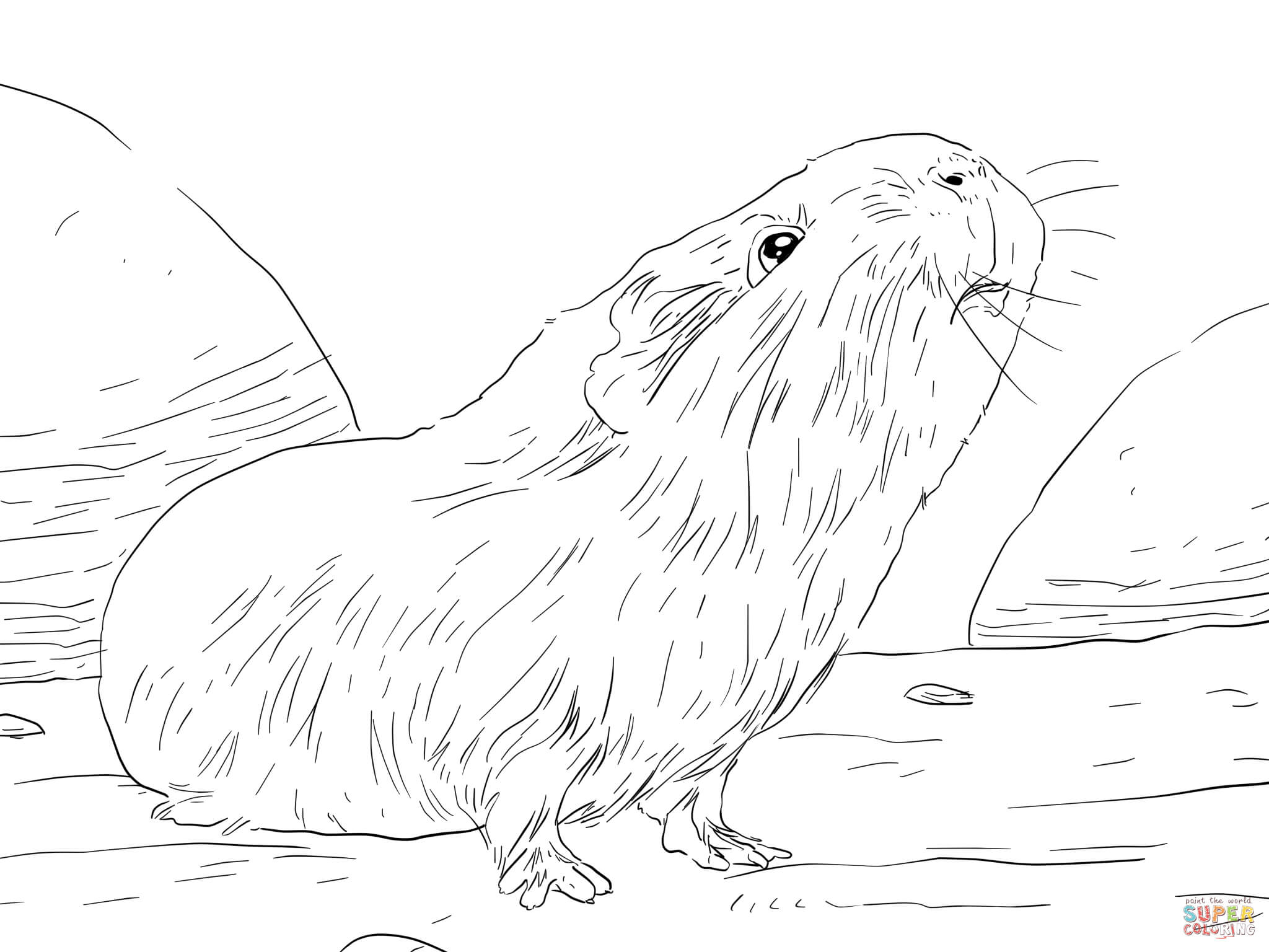 Free Guinea Pig Coloring Pages Curious Guinea Pig Coloring Page Free Printable Coloring Pages