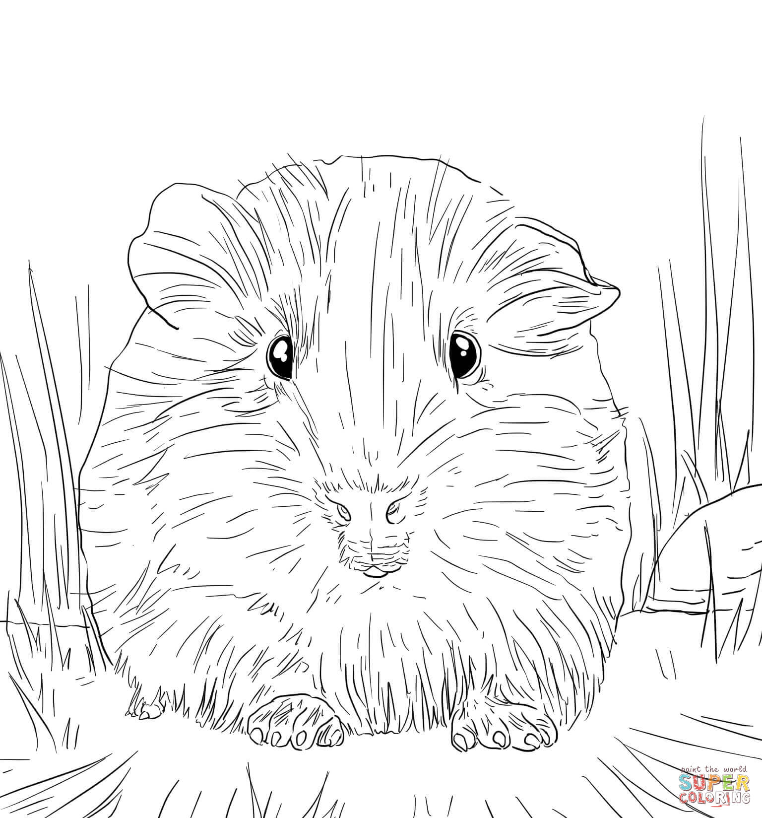 Free Guinea Pig Coloring Pages Cute Guinea Pig Portrait Coloring Page Free Printable Coloring Pages