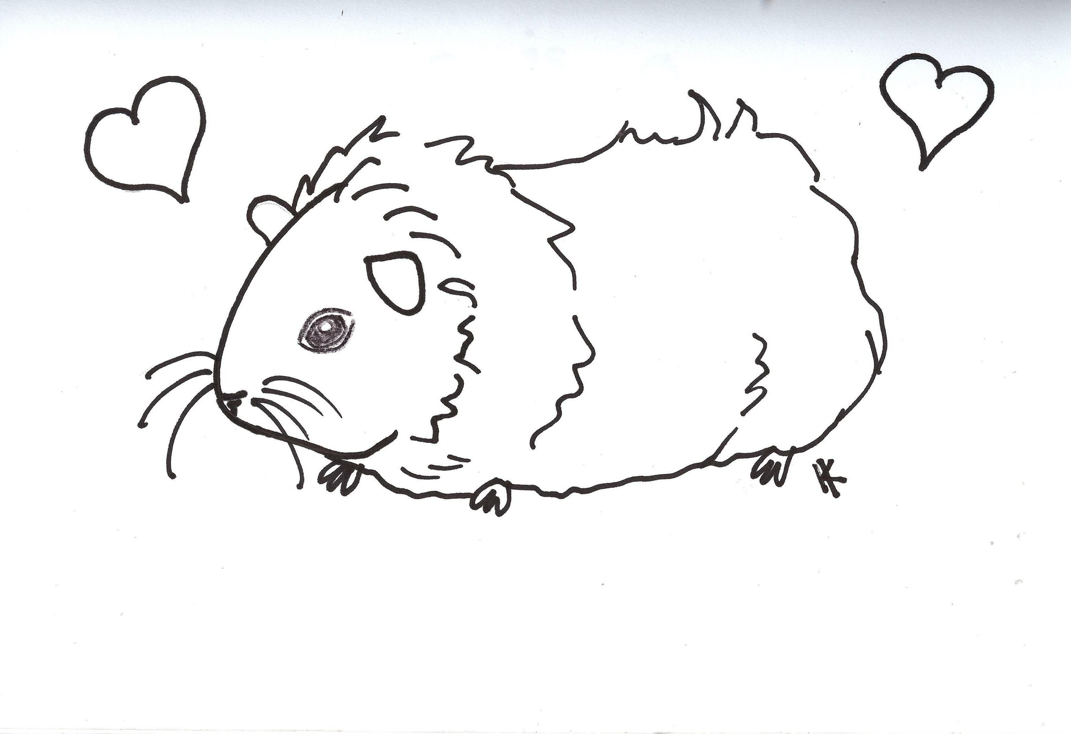 Free Guinea Pig Coloring Pages Ginnie Pig Coloring Pages Coloring Home