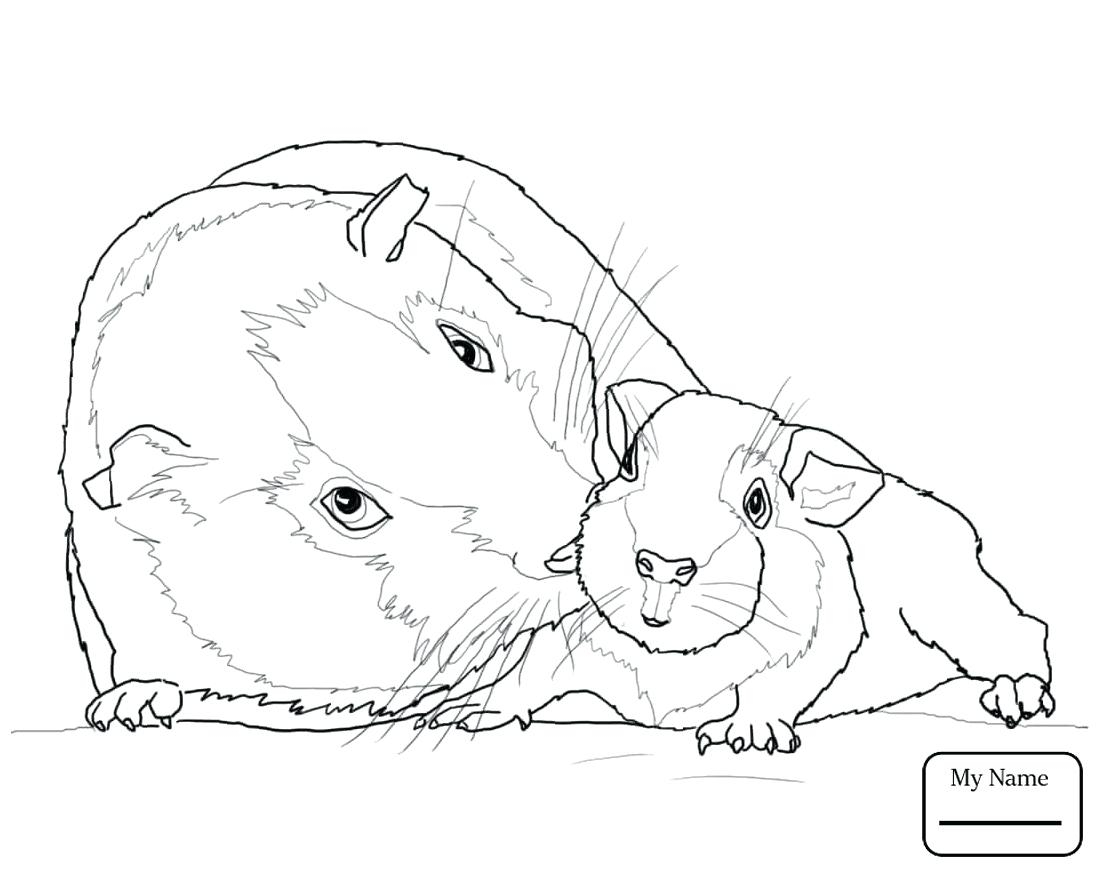 Free Guinea Pig Coloring Pages Pictures Of Pigs To Color Quorumsheetco