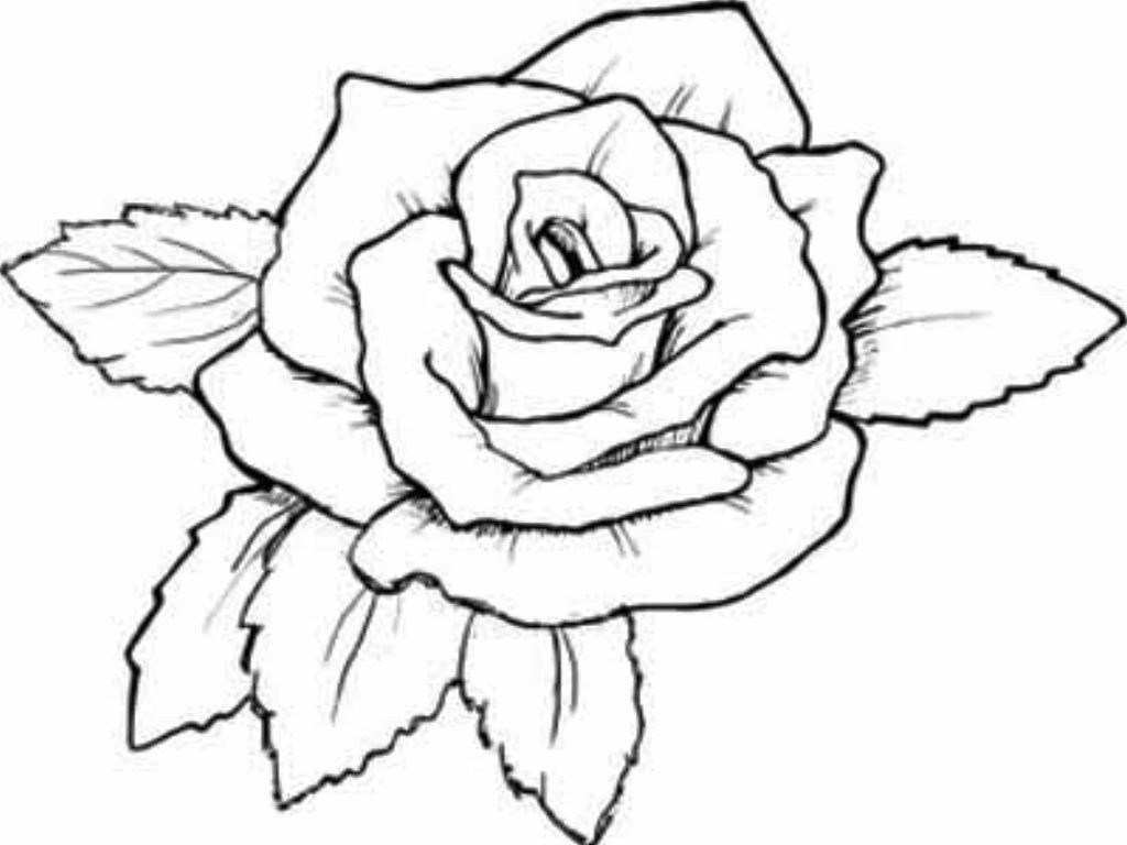 Free Rose Coloring Pages Coloring Page Coloring Page Rose Sheets Free Printable Roses Pages