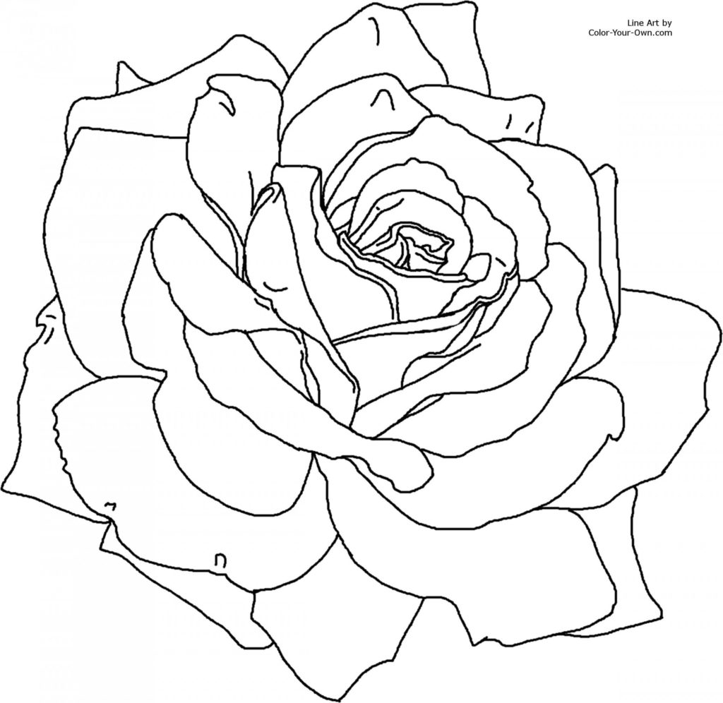 Free Rose Coloring Pages Coloring Rose Coloring Page Pages Roses Download Www Allanlichtman