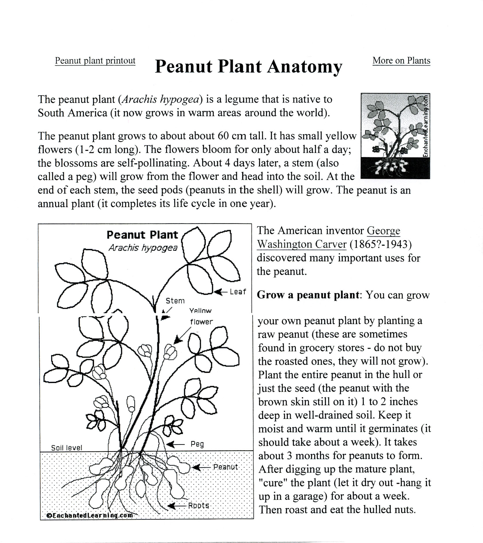 George Washington Carver Coloring Page Student Pages