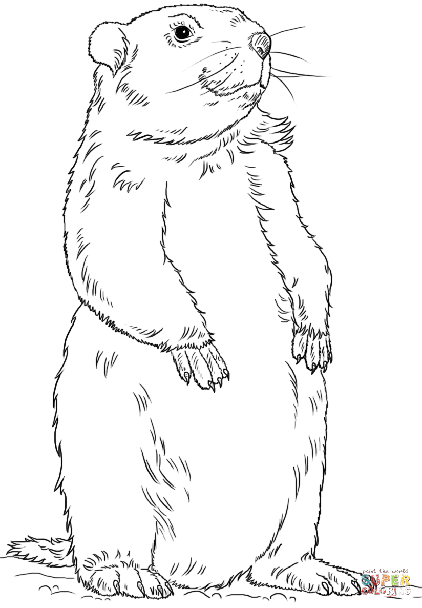 Groundhog Day Printable Coloring Pages Groundhog Standing Coloring Page Free Printable Coloring Pages