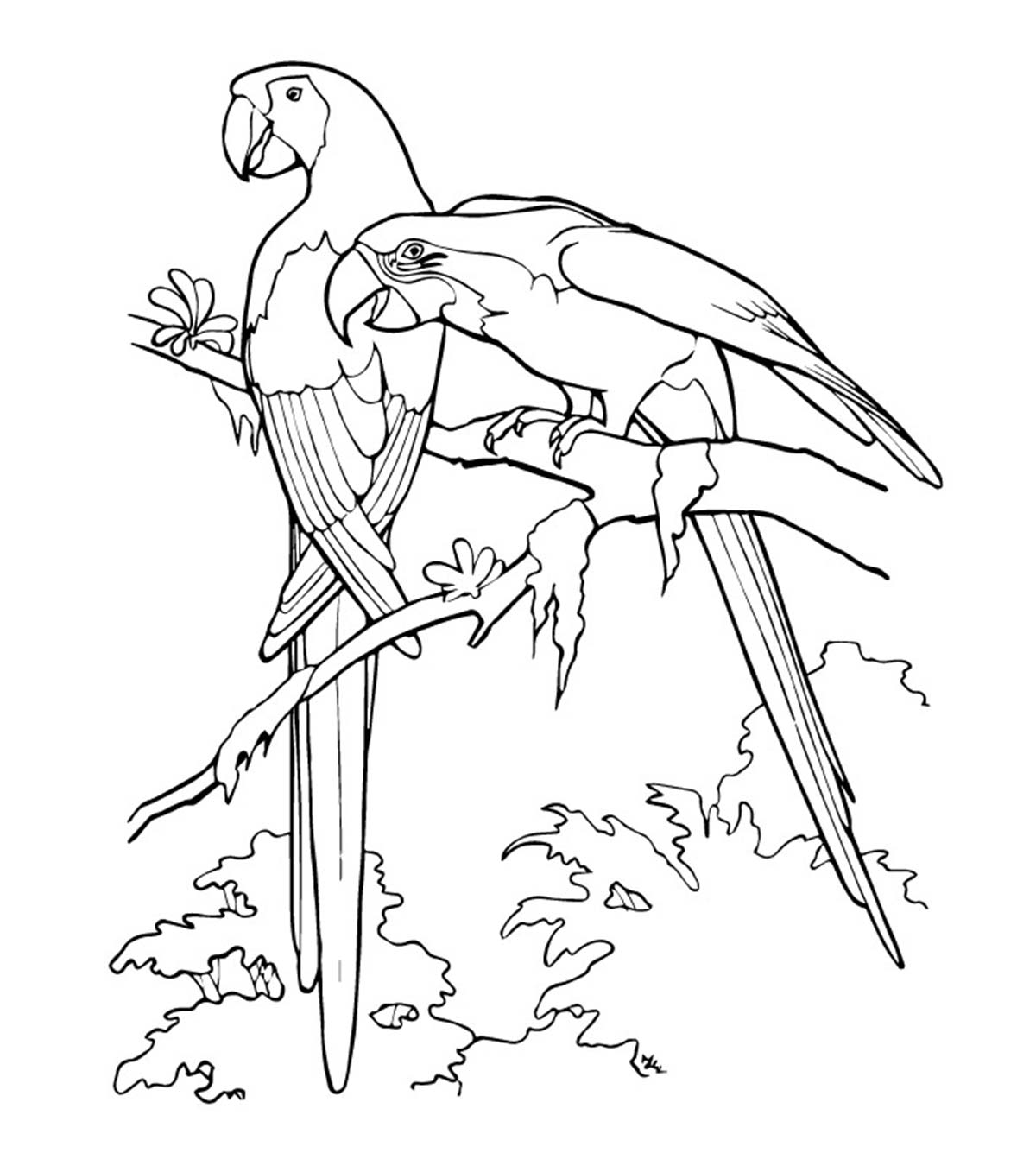 Love Bird Coloring Pages 25 Cute Parrot Coloring Pages Your Toddler Will Love To Color