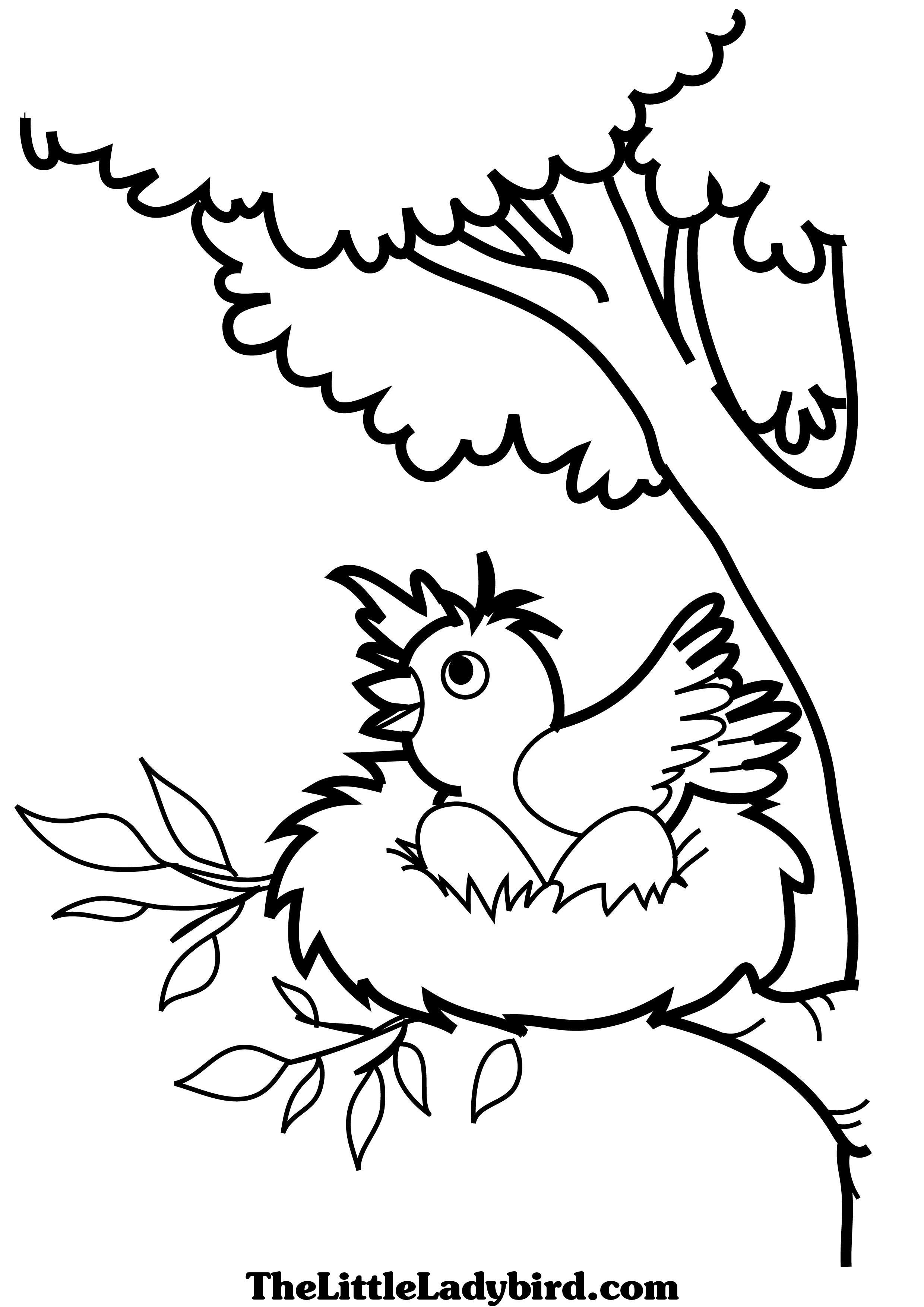 Love Bird Coloring Pages Birds Coloring Pages Thelittleladybird