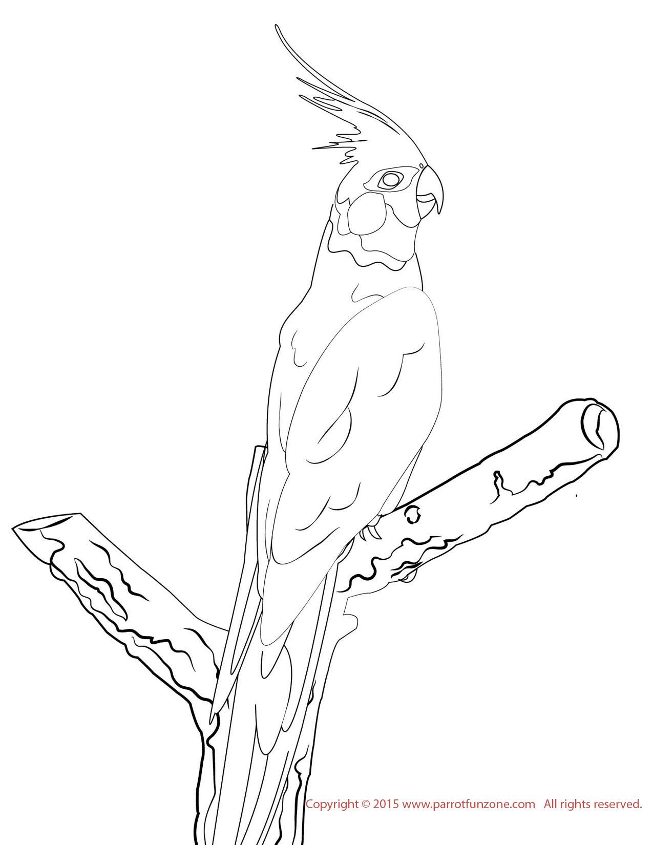 Love Bird Coloring Pages Cockatiel