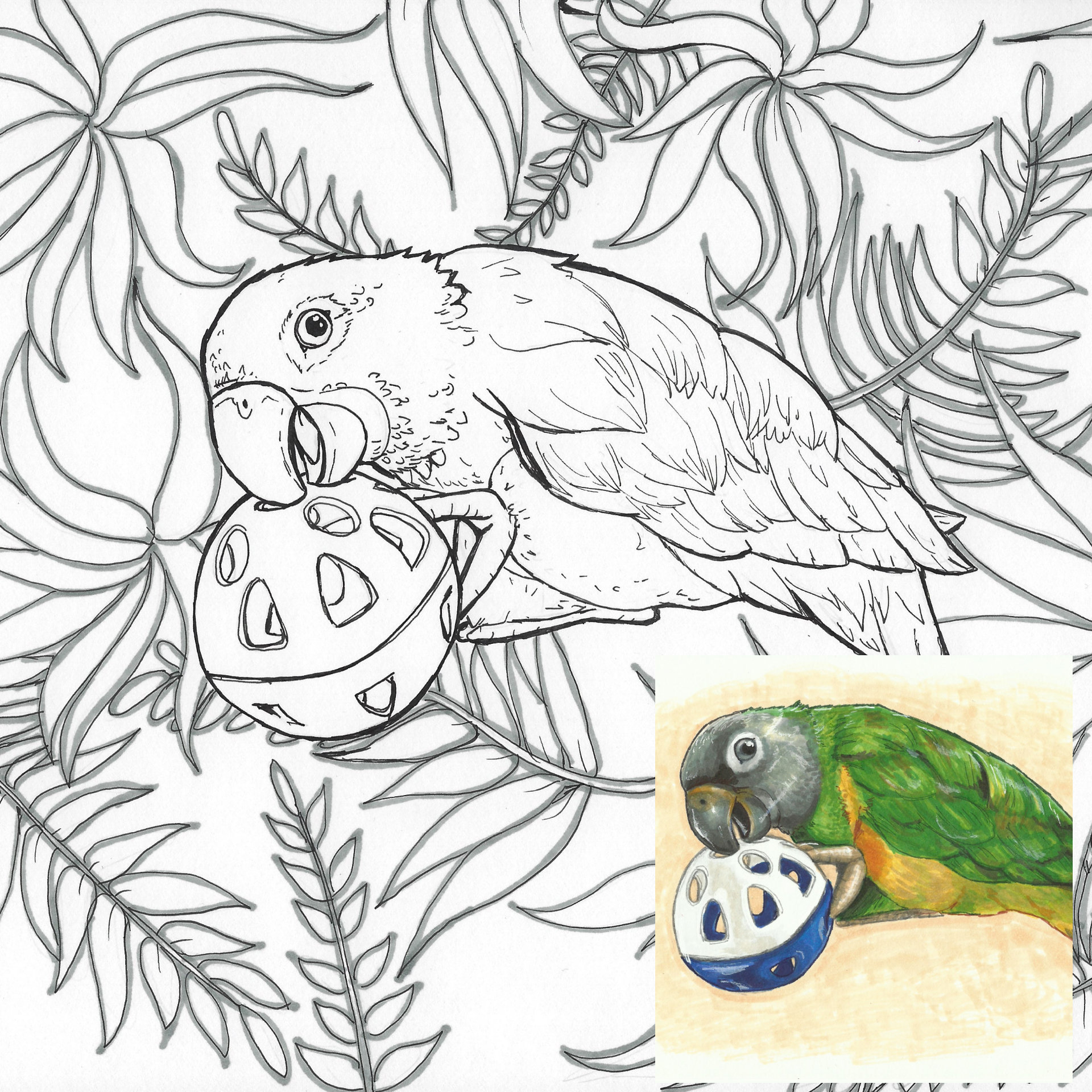 Love Bird Coloring Pages Parakeet Bird Coloring Page With Printable Wall Art Instant Download Coloring Sheets For Adults And Kids Animal Theme Party Activity