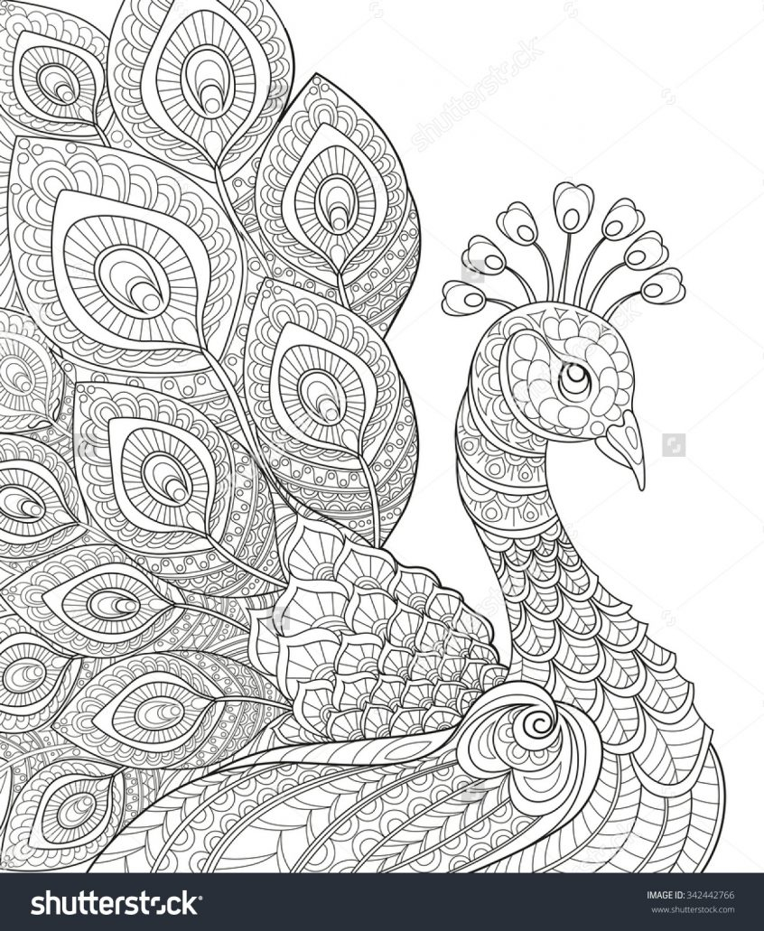 Peacock Color Page Coloring Easy Coloring Pages To Print For Adults With Peacock On