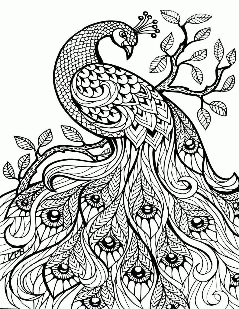 Peacock Color Page Coloring Peacock Colouring Pictures Stunning Photo Inspirations
