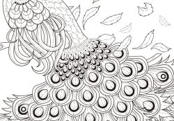 Peacock Color Page Graceful Peacock Coloring Page Free Printable Coloring Pages