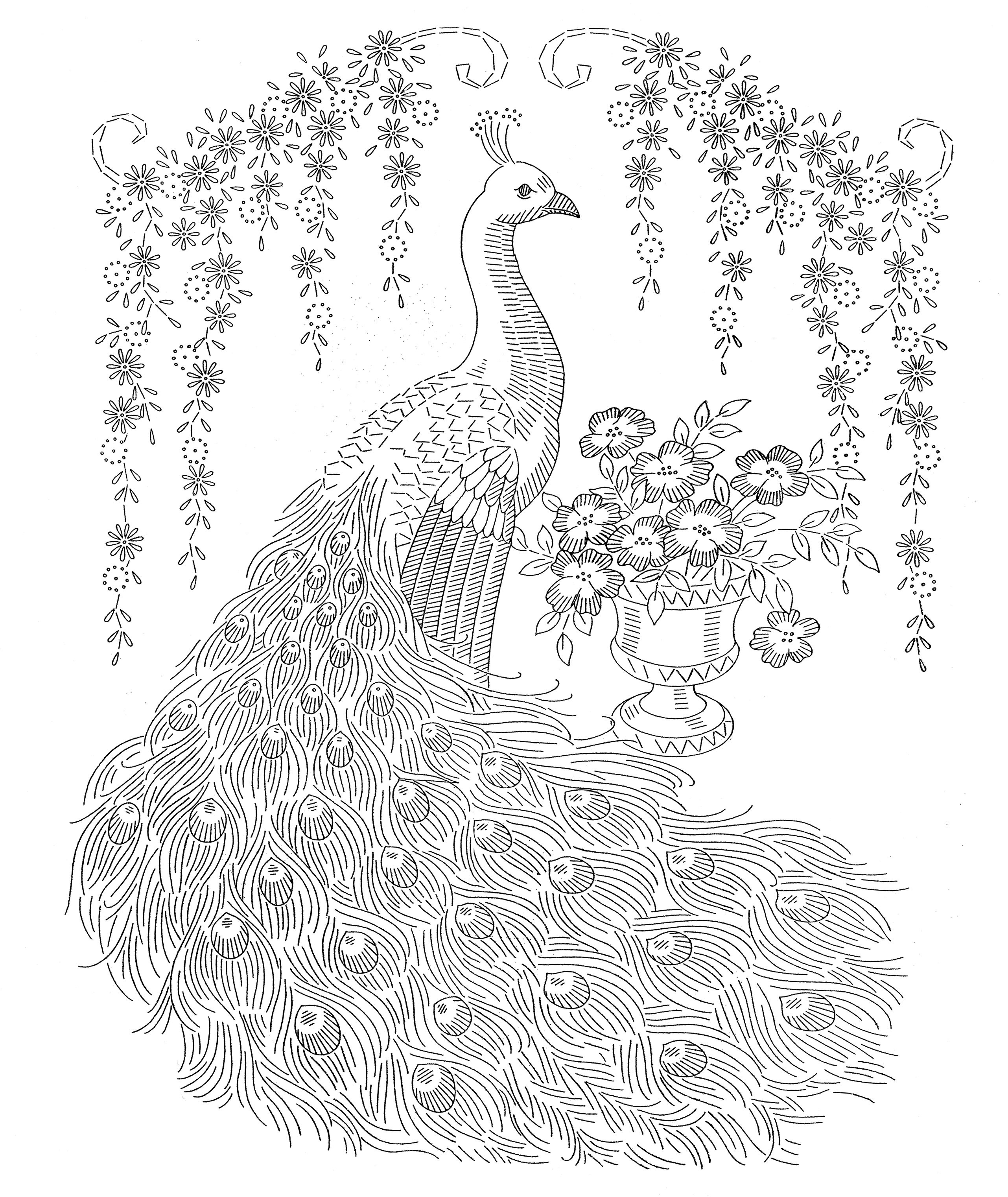 Peacock Color Page Peacock Coloring Pages Peacock Color Page 16 Coloring On Pictures Of
