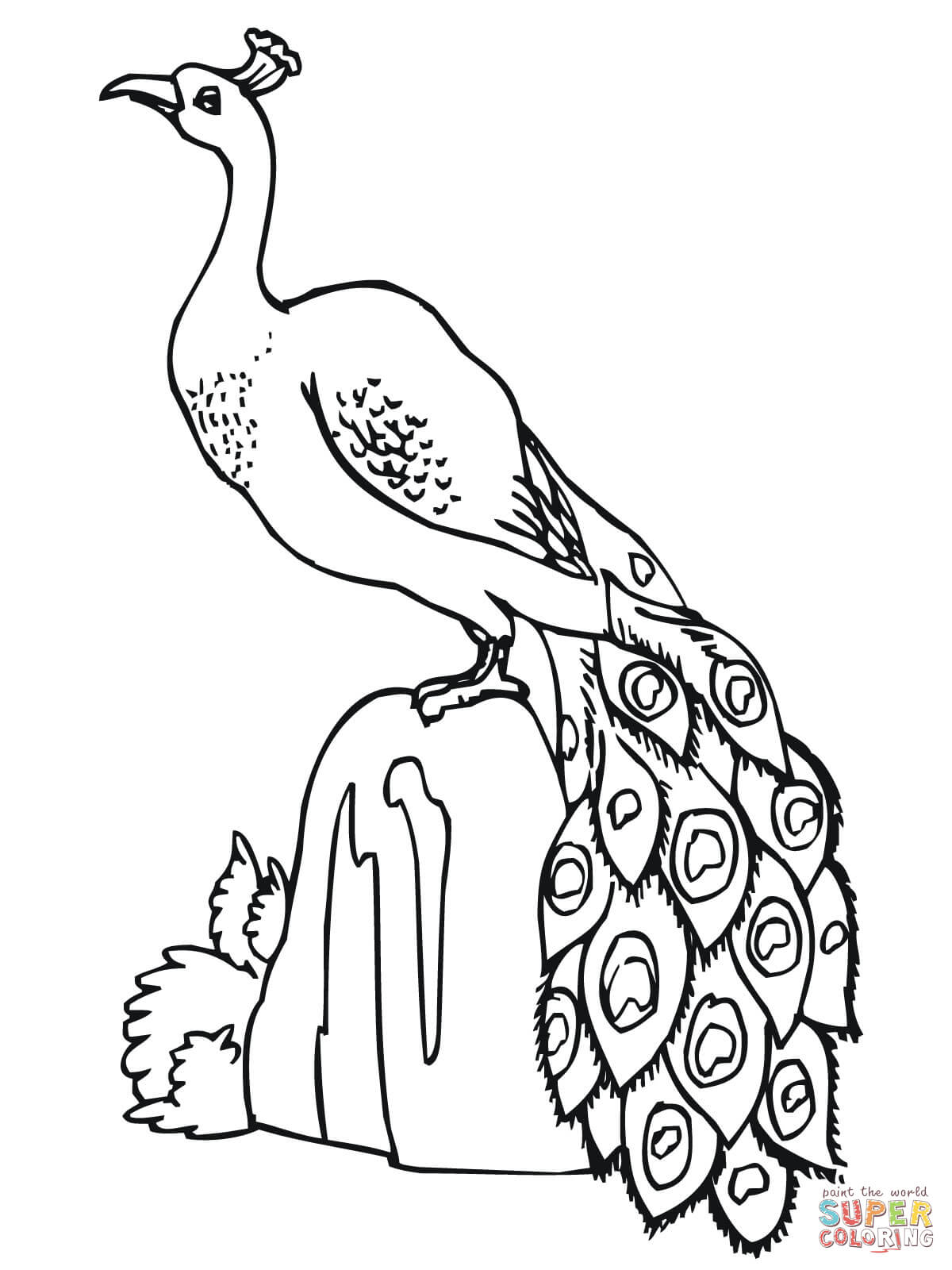 Peacock Color Page Peacocks Coloring Pages Free Coloring Pages