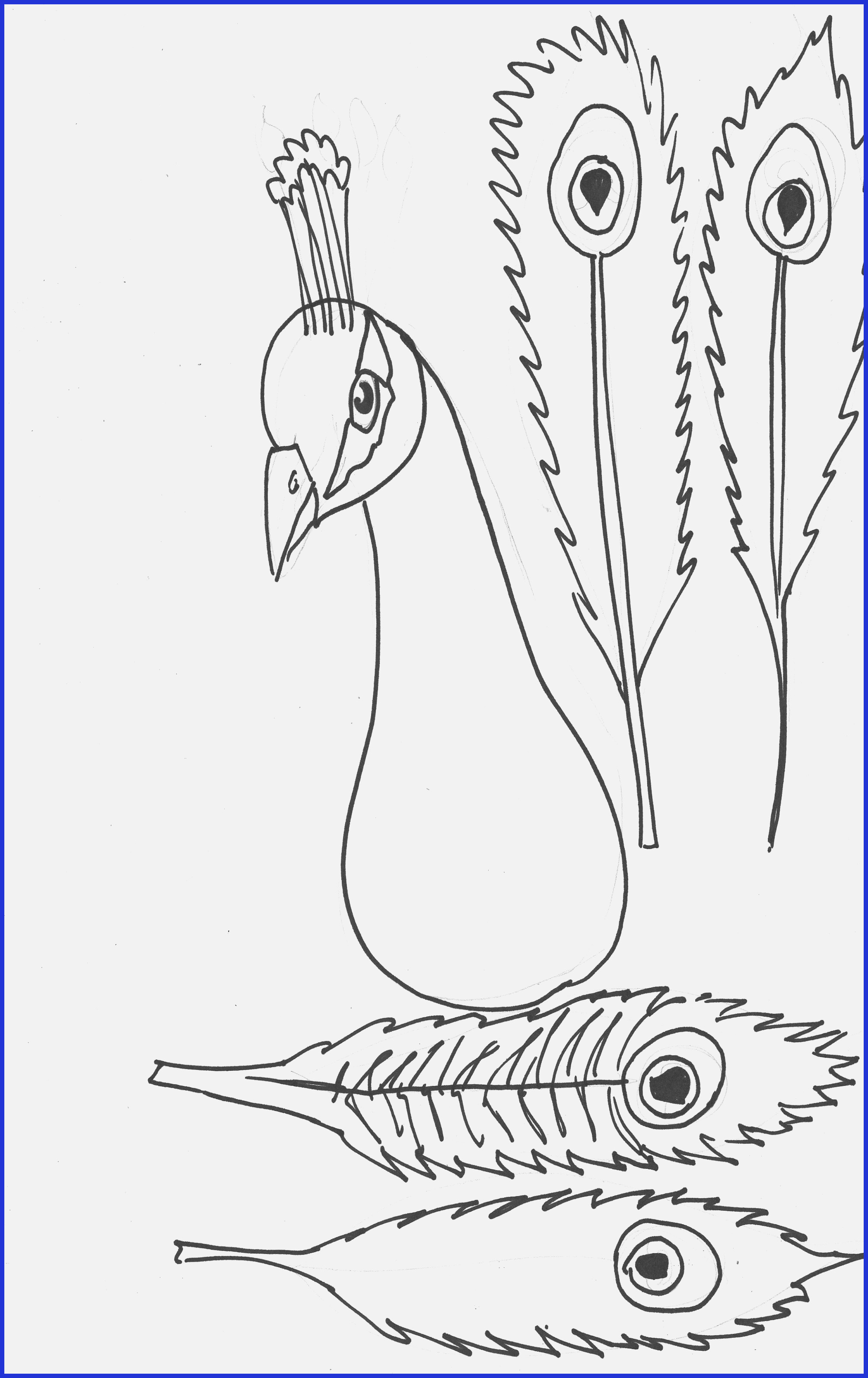 Peacock Color Page Shark Pictures For Kids To Color Peacock Coloring Pages For Kids