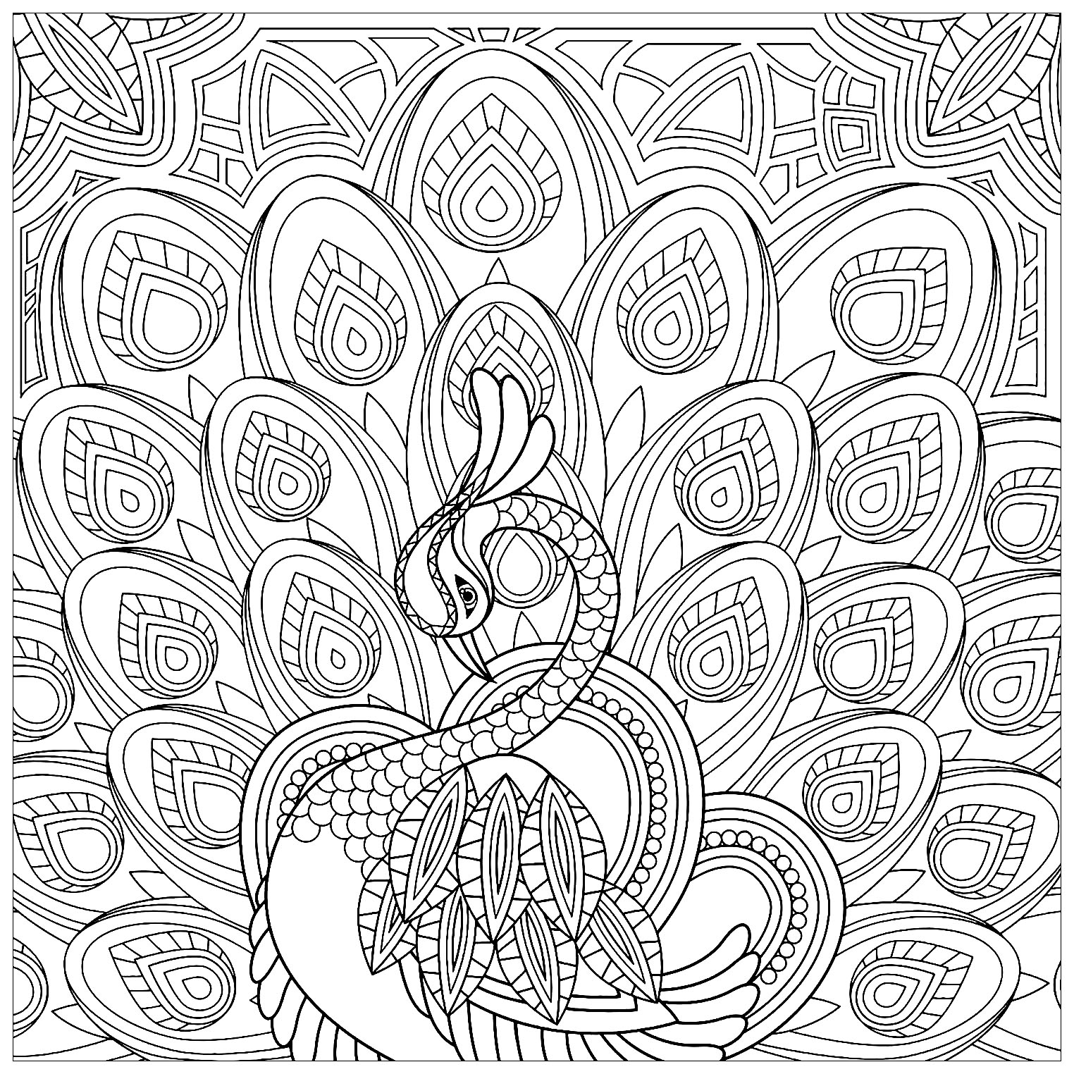 Peacock Color Page Squared Coloring Page Of A Peacock Peacocks Adult Coloring Pages
