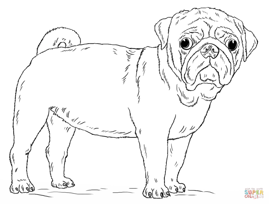 Pug Puppy Coloring Pages Cute Pug Dog Coloring Page Free Printable Coloring Pages