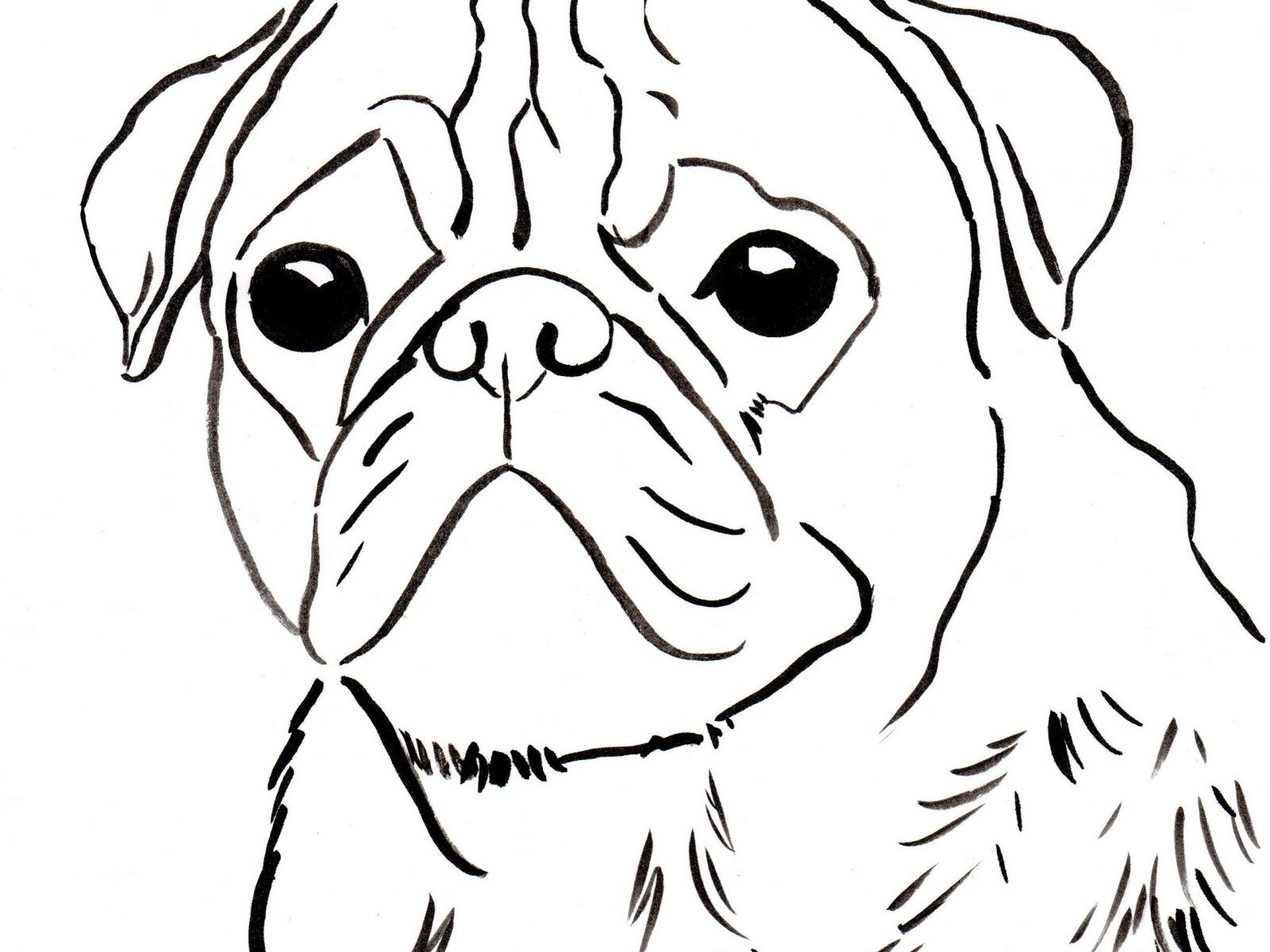 Pug Puppy Coloring Pages Pug Coloring Pages Beautiful Chinese Pug Coloring Pages Puppy