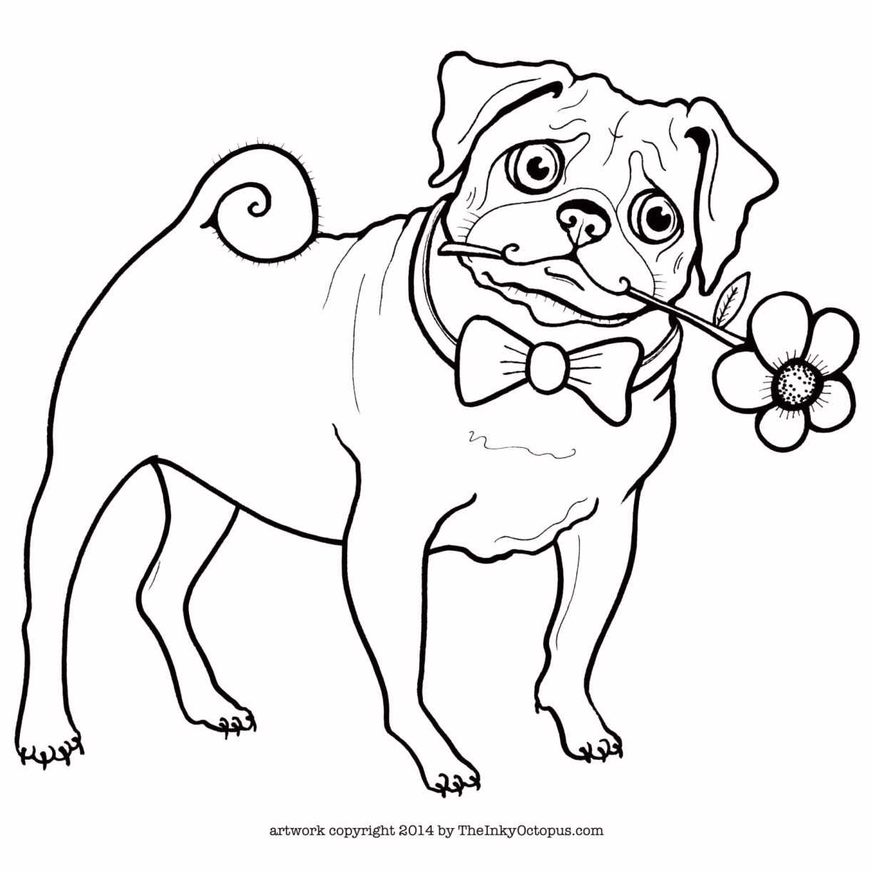 Pug Puppy Coloring Pages Pug Outline Drawing Free Download Best Pug Outline Drawing On