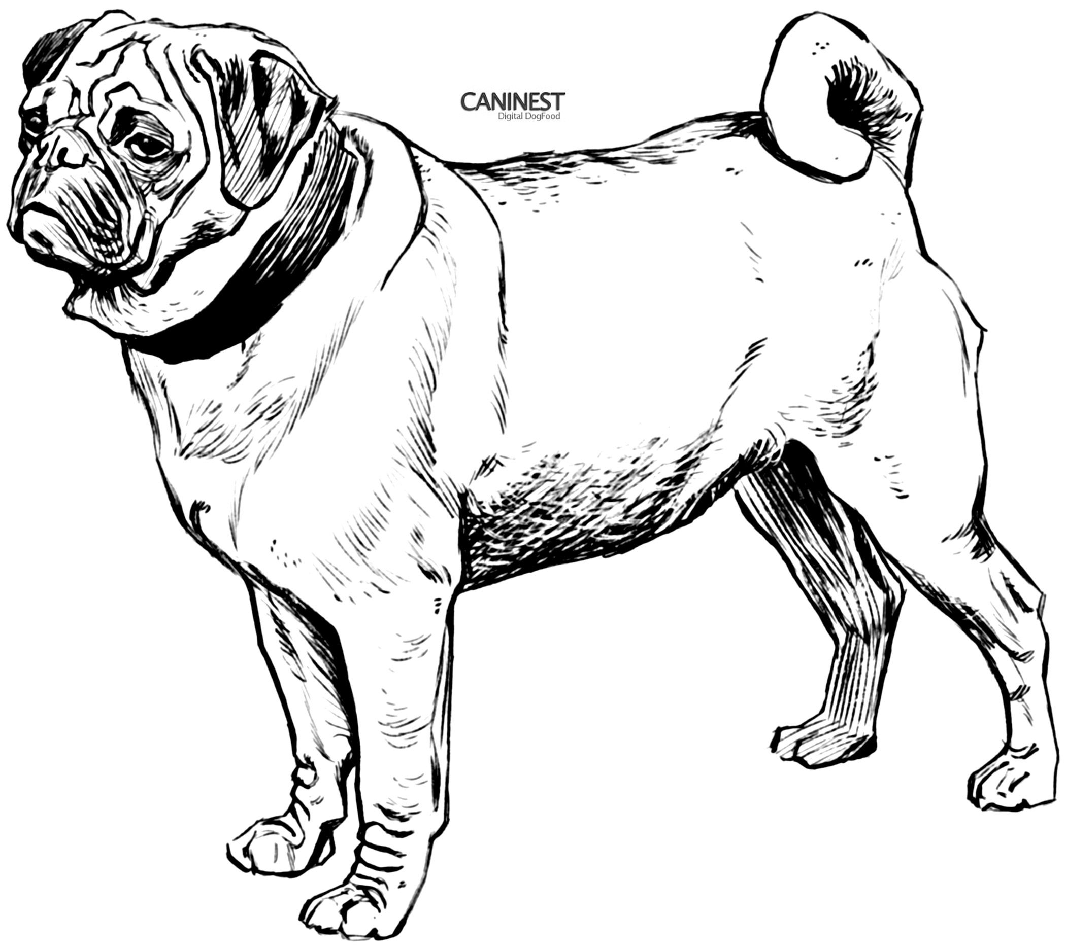 Pug Puppy Coloring Pages Pug Puppy Coloring Page Coloring Home