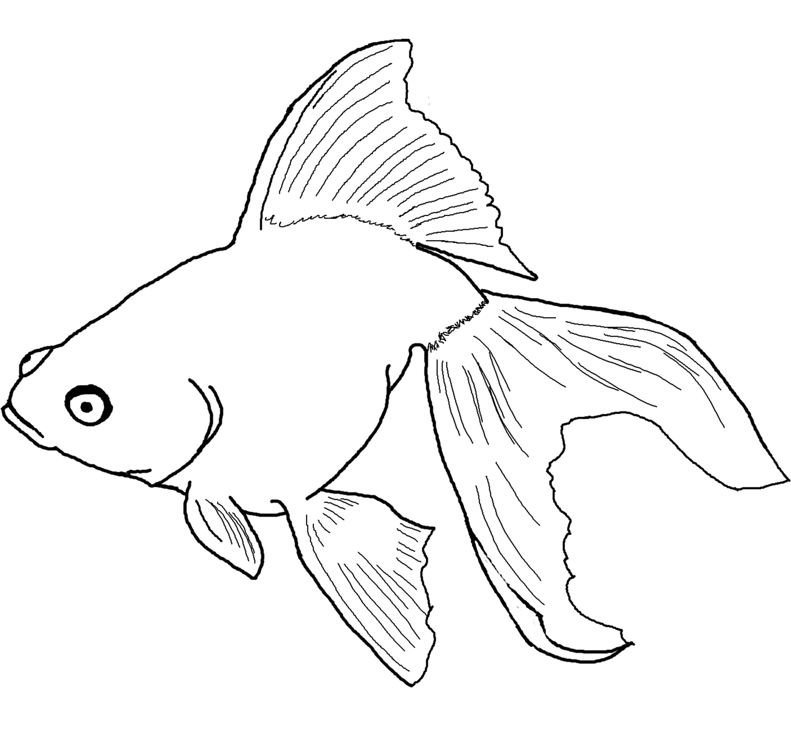 Rainbow Fish Coloring Pages Preschoolers Free Printable Fish Coloring Pages For Kids