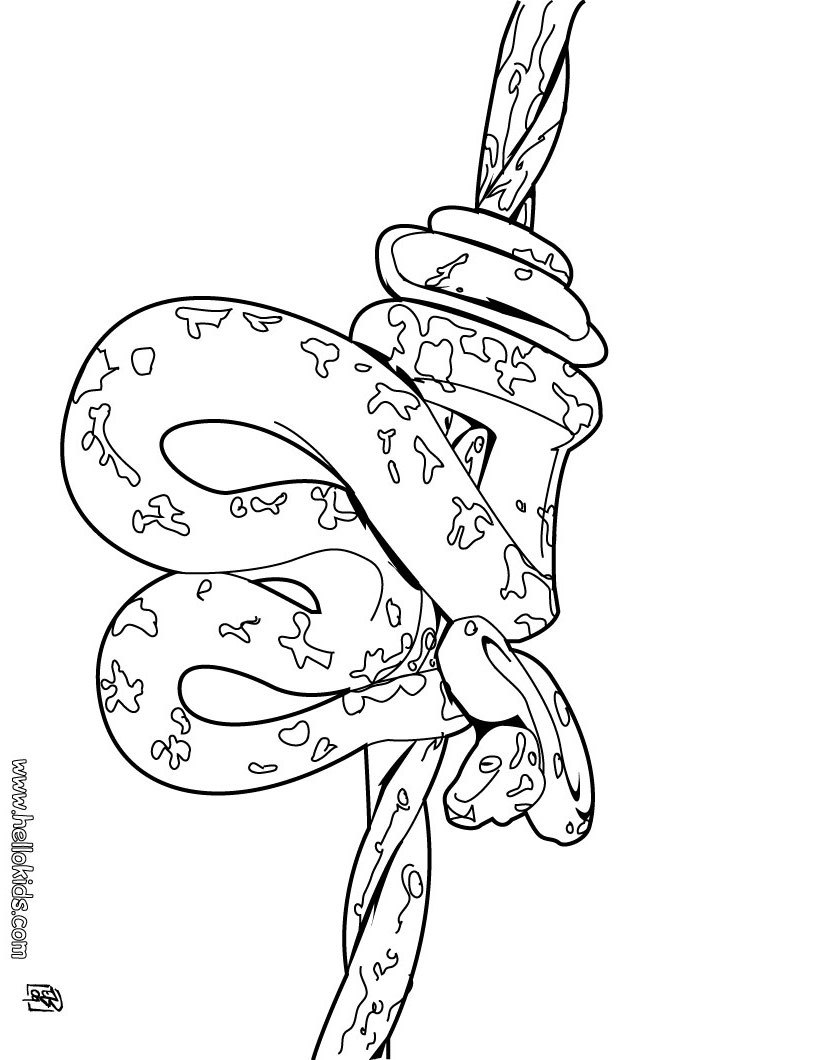 Rattle Coloring Page Cute Snake Coloring Page Cute Snake Coloring Pages The Snake