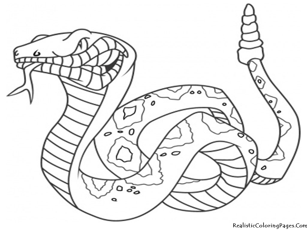 Rattle Coloring Page Rattlesnake Coloring Page Xorforums