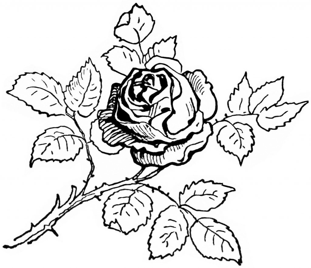 Roses And Hearts Coloring Pages Lifetime Coloring Pages Of Rose Book Pictures Roses Amy Printable